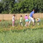 6.1.-Mladi poljoprivrednici