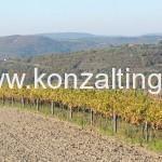 Restrukturiranje vinograda_2